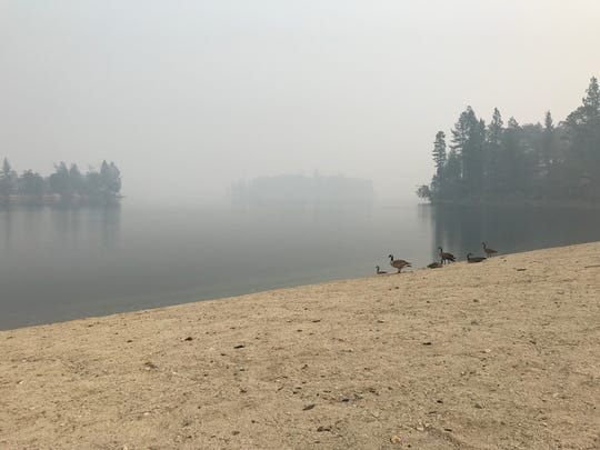 A flock of geese have Brandy Creek Beach all to themselves as smoke from the Carr Fire hangs over Whiskeytown Lake.