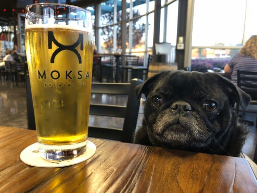 Dog-friendly craft breweries let you bring Fido on your