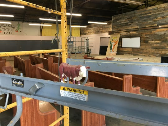 Houston the Hereford is overseeing preparations for