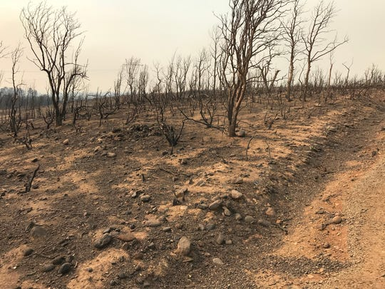 Some areas of the Carr Fire burned with such intensity that there is little vegetation left to hold the soil in place during rains.