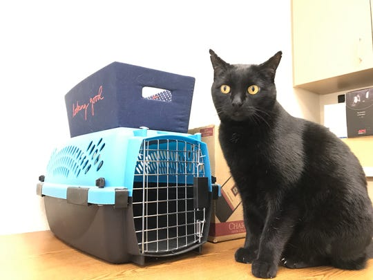 Since surviving nine days in a storm drain while the Carr Fire burned around him last summer, Jimmy the Cat has made the transition indoors.