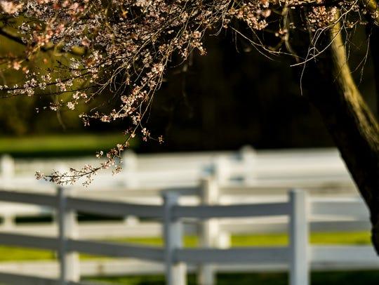 Most tree-based allergies should die down in early summer.
