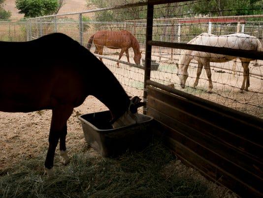-BCEBrd_07-27-2014_BCE_1_C004~~2014~07~26~IMG_Pets_Horse_Rescue_2_1_VK81I4VM.jpg