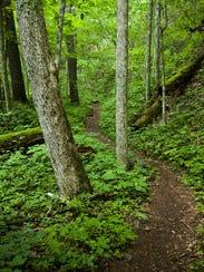 The Ramsey's Draft trail winds through George Washington