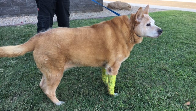 The Maricopa County Sheriff's Office says the 80-pound, mixed-breed dog had deep gashes on its front legs.
