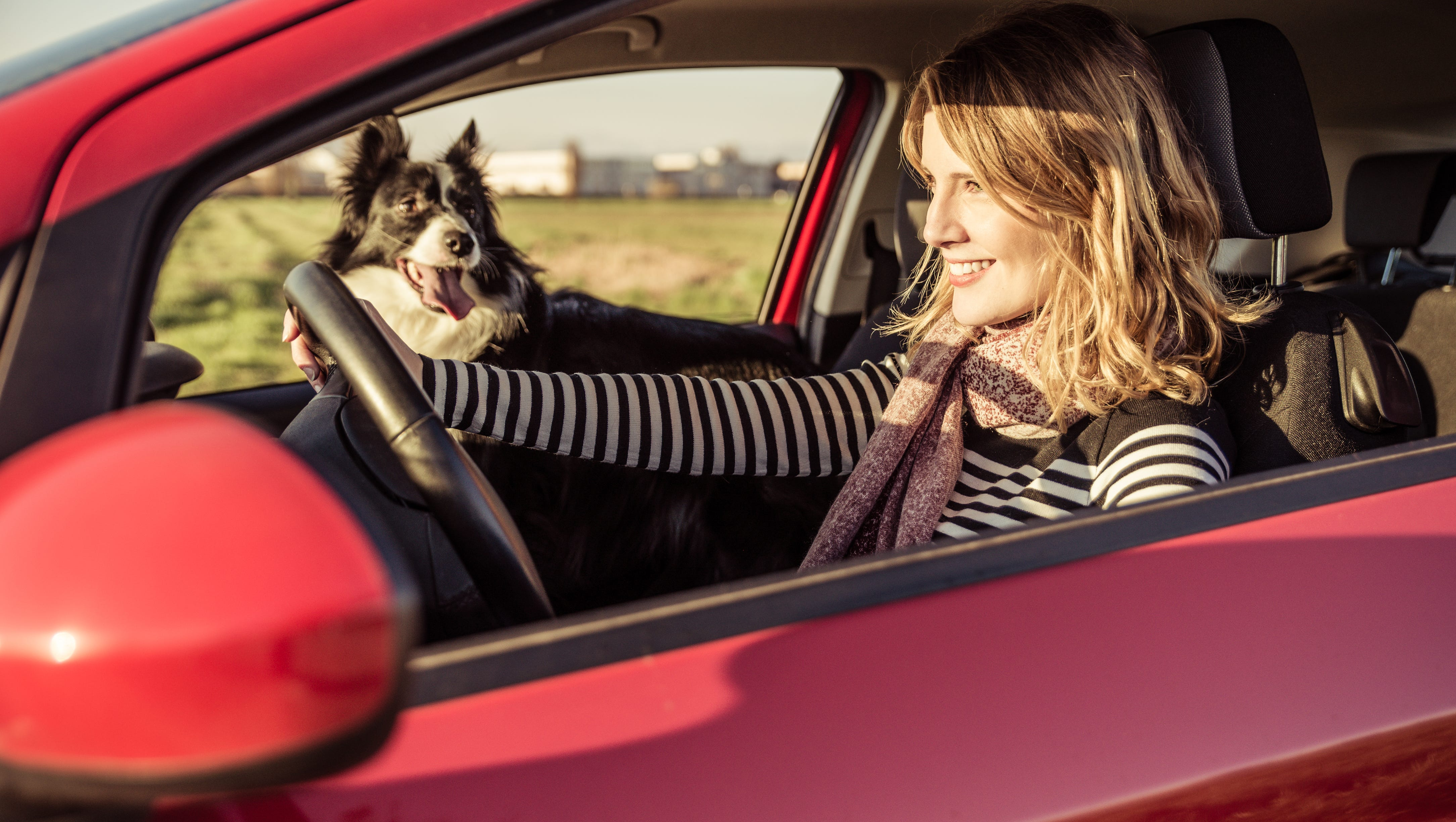 14 tips for keeping your dog safe during this summer's heat wave