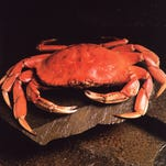 Price talks further delay Dungeness crab season