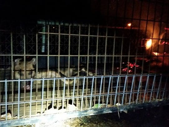 A fire caused by a space heater killed four dogs in