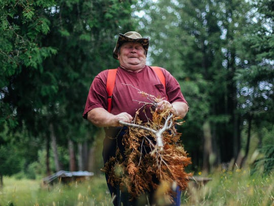 Richard Hiltunen 61of Kearsarge, MI shows signs of struggle as a branch he uses to demonstrate dowsing pulls toward the ground to mark the sign of water from an underground river flowing beneath the Keweenaw Vortex behind Prospector's Paradise in Allouez, Mich., on Tuesday, July 29, 2014, while pacing in its direction. 'I've always been a dowser so I could feel lots of energy all the time. Every place you go there's different hotspots in the U.P. and all over the world you can feel different hotspots,' Hiltunen said. 'This is one of the gifts that god gives a human but not everybody. You'll be very surprised that there ain't that many.'
