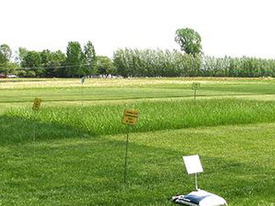 -LCC-Fig9-grass-seed-site-demo-LRG.JPG_20090817.jpg