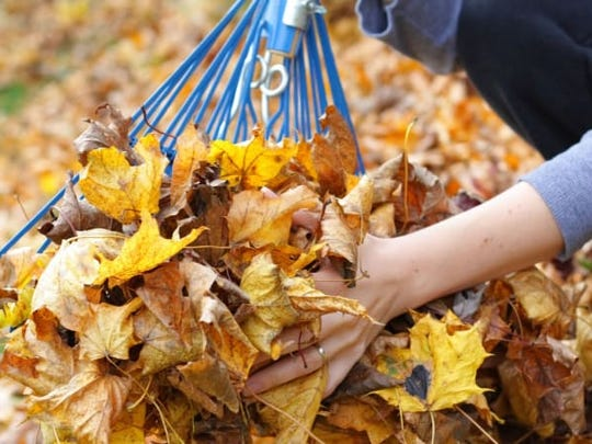 Be sure to support your rake as you pick up leaves (or use another tool entirely) to avoid snapping tines.