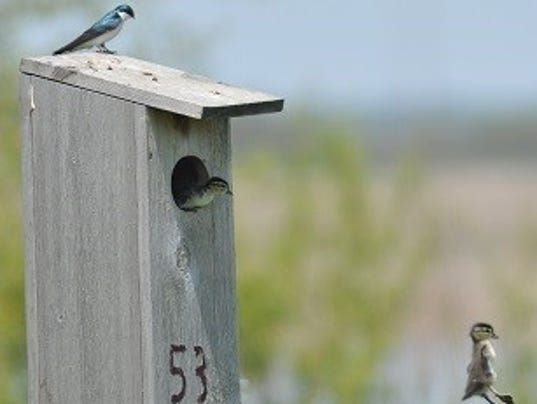 636229221861081379-birds.jpg