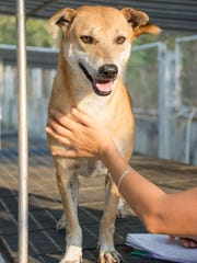 Lavender, 6, is very friendly with people according to a Soi Dog report.