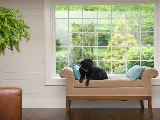 Willow, Jeff Wilke and Jenny Gray's dog, sits on her