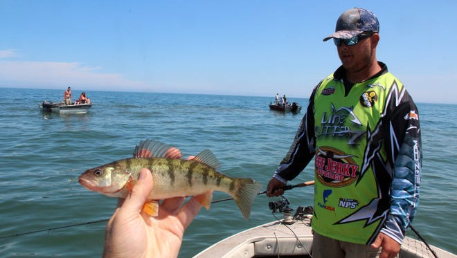 An 8-inch-long yellow perch is displayed as Tim Hyvonen of Oak Creek fishes in the bow of the boat in the Lake Michigan waters near Milwaukee.