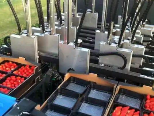 Robotic-strawberry-picker.JPG