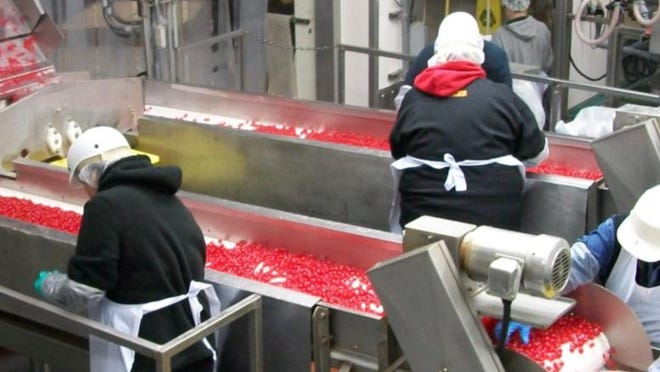 Workers at Oregon Cherry Growers in Salem prepare the company's product.