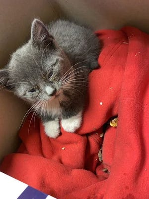 Dory Peterson and her family rescued a kitten that was trapped in the hood of their car.