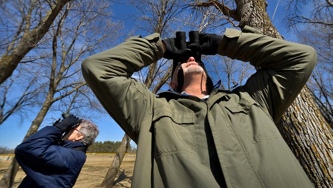 Naturalist volunteer husband-and-wife team Dean Kleinhans and Sue Hix use binoculars Friday afternoon to scour the tops of ash trees in Elk River's Orono Park, looking for signs of woodpecker activity that would indicate the presence of emerald ash borer larvae. No signs were found there yet.