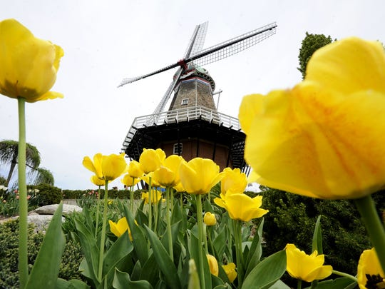 Tours of Windmill Islands DeZwaan are available. It is the only authentic Dutch windmill operating in the United States, during the Tulip Time festival in Holland.