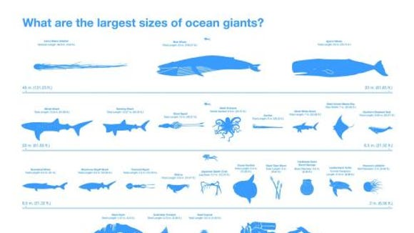 These are the largest sizes of the biggest ocean creatures