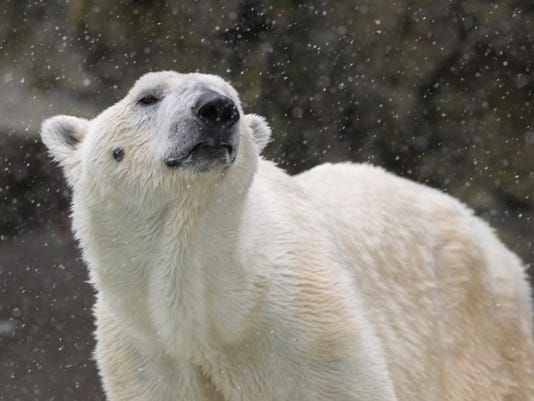 Zoo-Polar-Bear.jpg