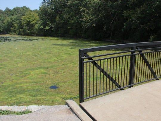 Algae covers Sequiota Park pond from edge to edge on