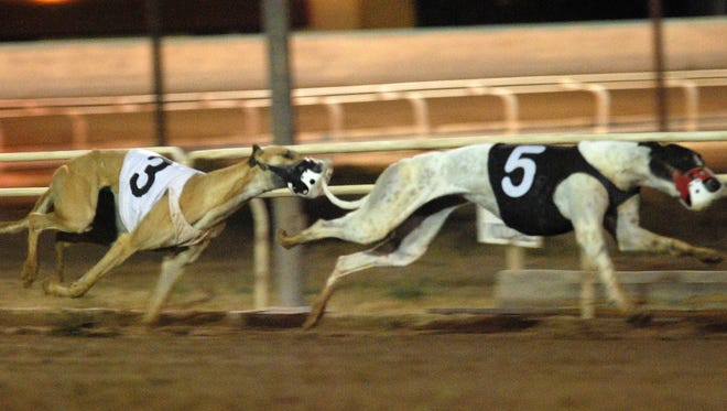 Dogs compete for the last time at the Phoenix Greyhound Park on Dec. 19, 2009.  The racetrack closed due to increased competition from casinos, declining revenue and dwindling visitor numbers.
