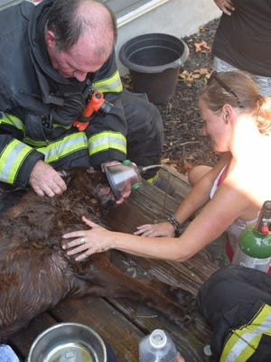 One dog died and another was rescued during a house fire Monday afternoon, July 11, 2016, on Indianapolis' north side. Dags, a chocolate Labrador retriever, was unresponsive when he was found.