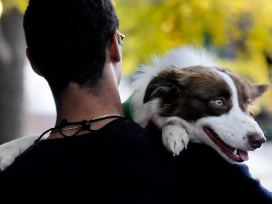 -MGMBrd_11-10-2012_Advertiser_1_B002~~2012~11~09~IMG_canine02.JPG_1_1_7L2N30.jpg