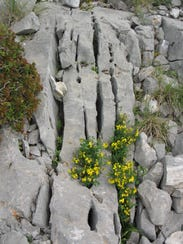 Limestone fractures are eroded by water to form karst