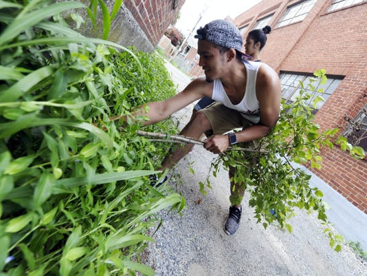 Oliver DeLarosa, 19, clears weeds from a building off of West Clarke Ave in York city on Friday.