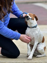 Raymond resident Kim Smith pets Wink, a 2-year-old Jack Russell terrier she rescued from a shelter in Mobile, Alabama.