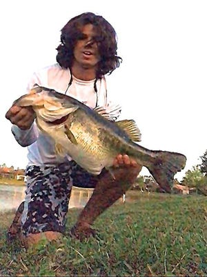 Dominic Montalto, 19, of Estero near Fort Myers, landed and released this monster 16-pound, 12-ounce largemouth bass in a small neighborhood lake. It hit a 3 1/2-inch artificial perch swim bait. The catch is the heaviest in the five-year history of Florida's TrophyCatch program sponsored by the Florida Fish and Wildlife Conservation Commission.