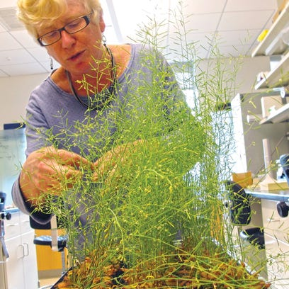 Mary L. Tierney, a professor of plant biology at UVM,