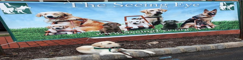 Seeing Eye holding dog pageant on Sunday in Morristown
