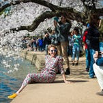 Ariel Adkins, 30, poses for her boyfriend/photographer Will Sealy, 30, both of New York, while checking out the cherry blossoms. An estimated 1.5 million people will attend the 104th annual National Cherry Blossom Festival, which commemorates Japan's gift of 3,000 cherry trees in 1912.