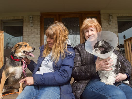 Shiloh, a German shepherd mix, left, held by Val Cunnings,