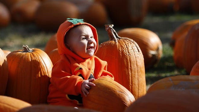 Take the kids to a pumpkin patch for a good time.