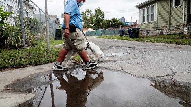 Longtime trainer Mike Tessmer works with Louie, a 1-year-old white labrador retriever, during a training walk.
