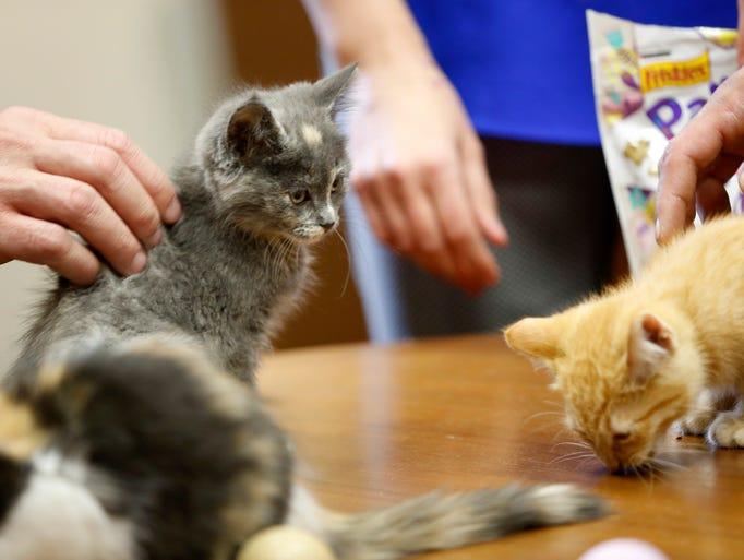 Cat Rescue Des Moines Iowa