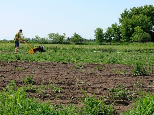 Alex Bertsch tills watermelon beds on his half-acre organic farm on Friday, June 17, 2016, near Milaca.