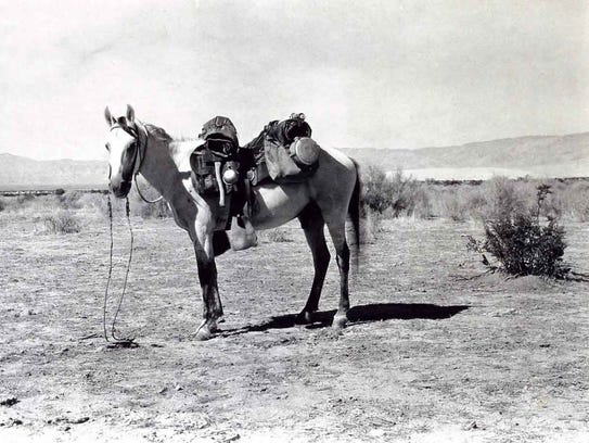 J. Smeaton Chase's horse