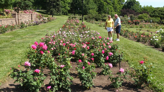 A file photo of the rose celebration at the Maplewood Rose Garden.