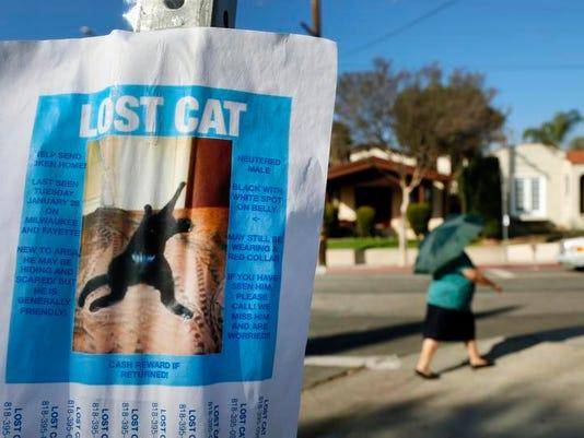 Pets Lost Cats_Duff.jpg