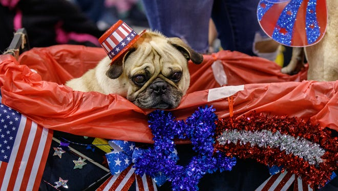 The pugs are back for the 15th annual Milwaukee Pug Fest Saturday and Sunday at the Milwaukee County Indoor Sports Complex in Franklin.