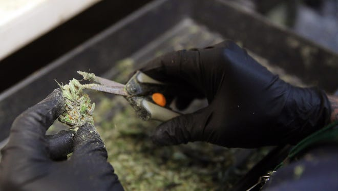 An employee trims marijuana in preparation to be packaged sold retail at 3D Cannabis Center, in Denver, Friday Feb. 14, 2014.