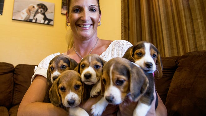 Laura Dunlap, owner of Arizona Beagles, holds some of her treasured pups at her home and office in Queen Creek.