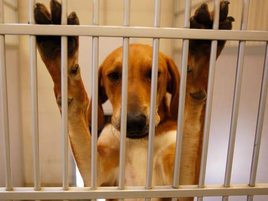 -122208 sm pet adopt3.jpg_20081222.jpg
