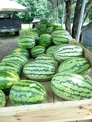 There are stands along U.S. Highway 67 at Cave City where you can get locally grown melons, such as these from the J.W. Perkey farm.
